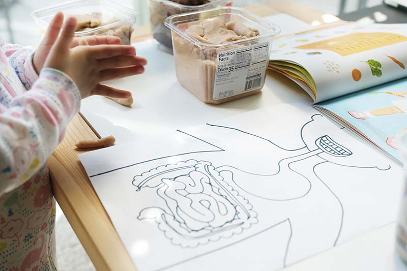 Human Body Unit Study for Toddlers: Digestive System (Montessori-friendly)