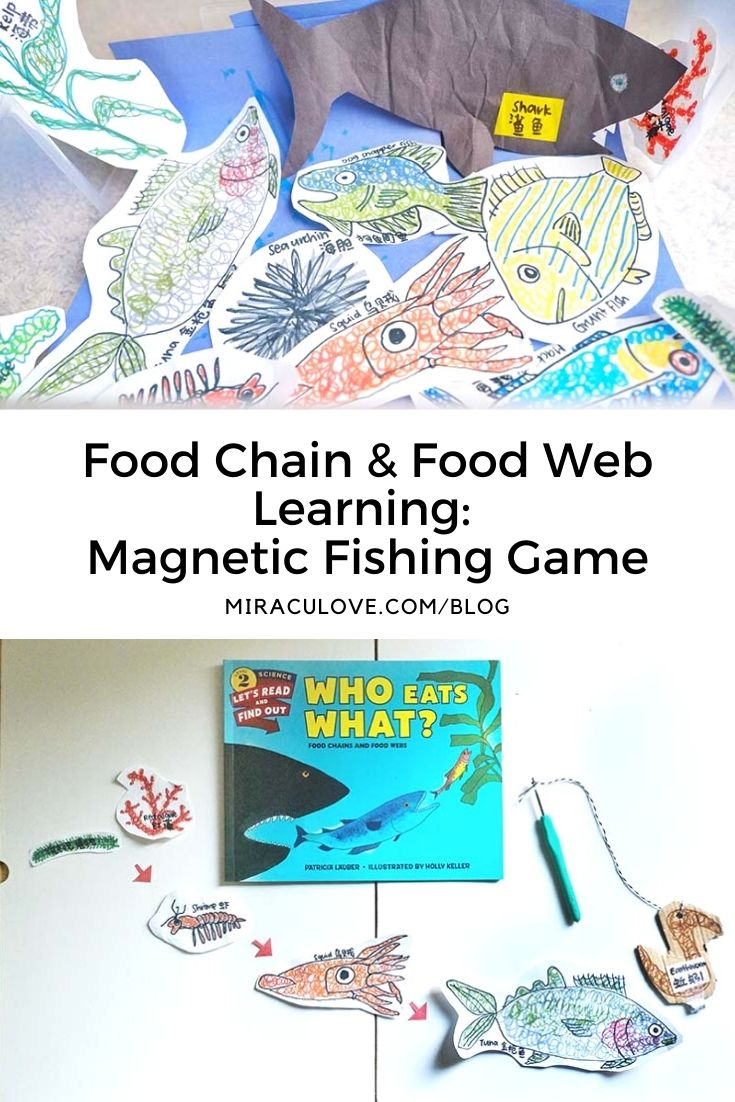 Food Chain & Food Web Learning: Magnetic Fishing Game