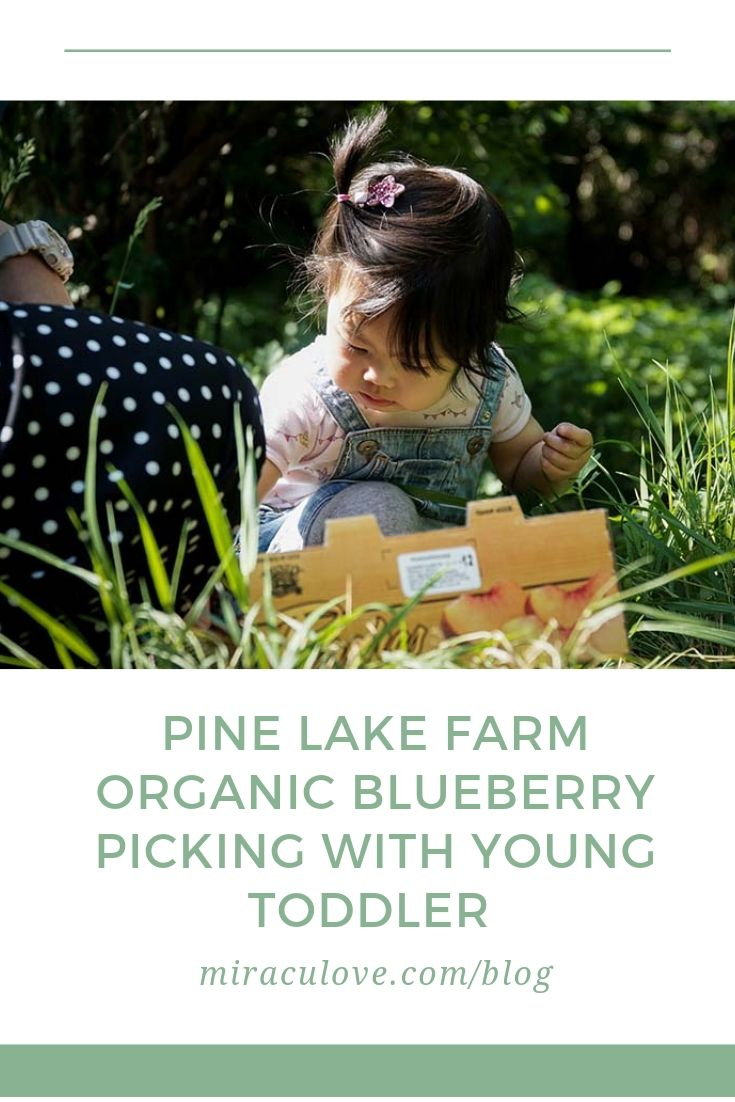 Pine Lake Farm Organic Blueberry Picking with Young Toddler