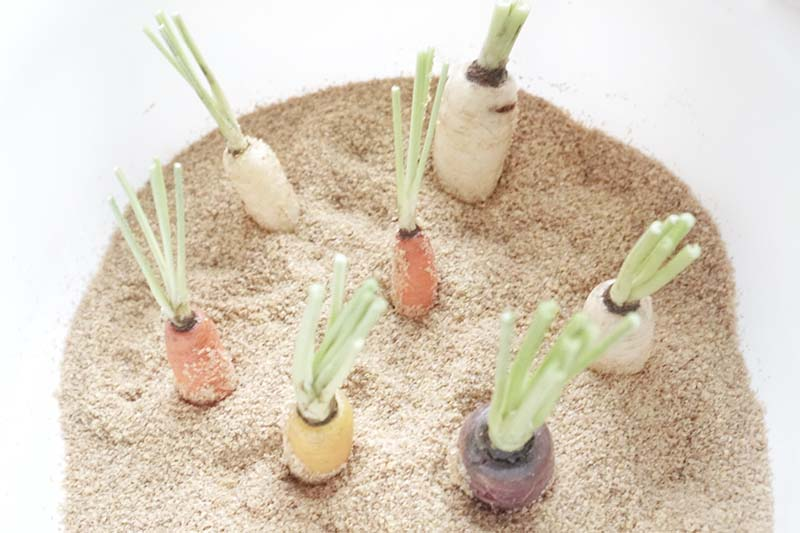 Vegetable Garden Sensory Bin for Toddlers