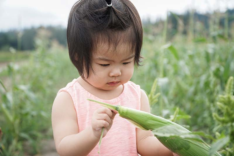 Vegetable Picking at Bailey Family Farm WA with Young Toddler