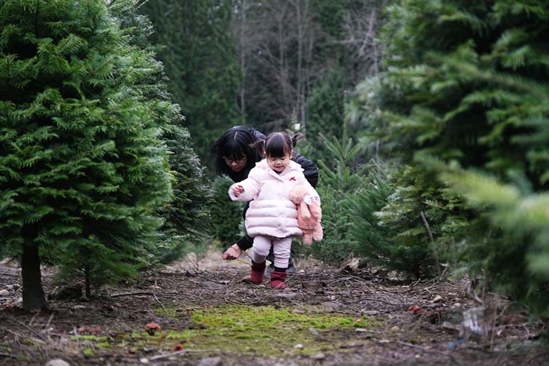 Visiting Trinity Tree Farm Issaquah WA with Young Toddler