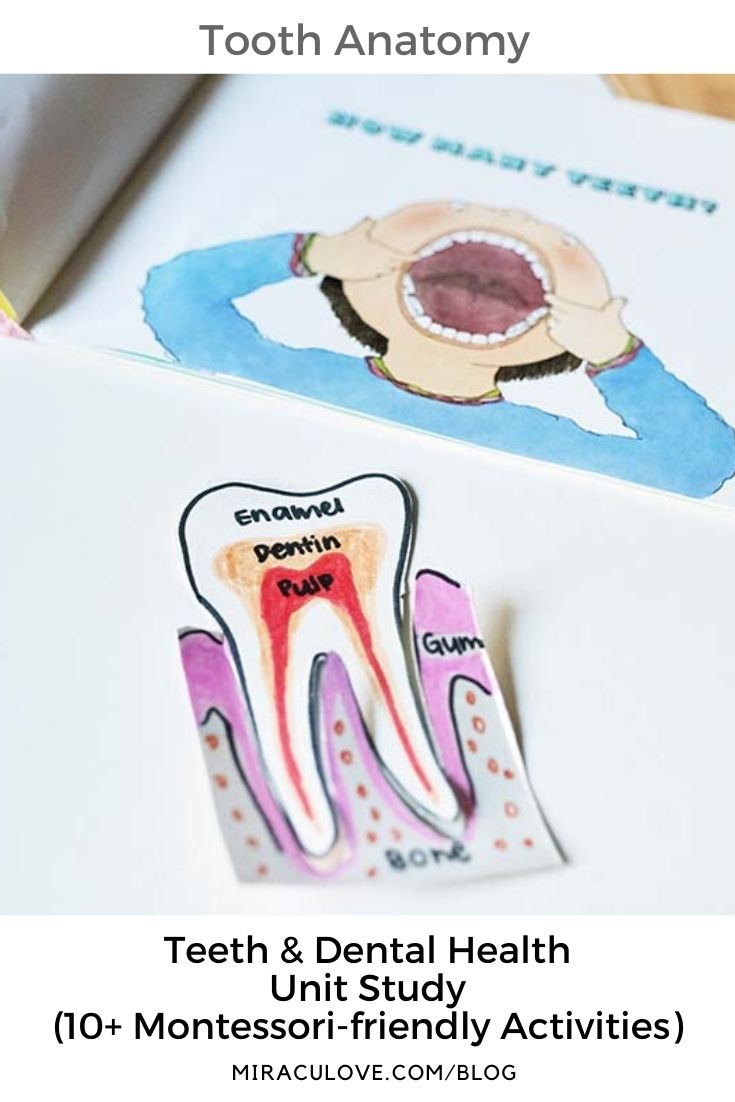 Teeth & Dental Health Unit Study (Montessori-friendly)