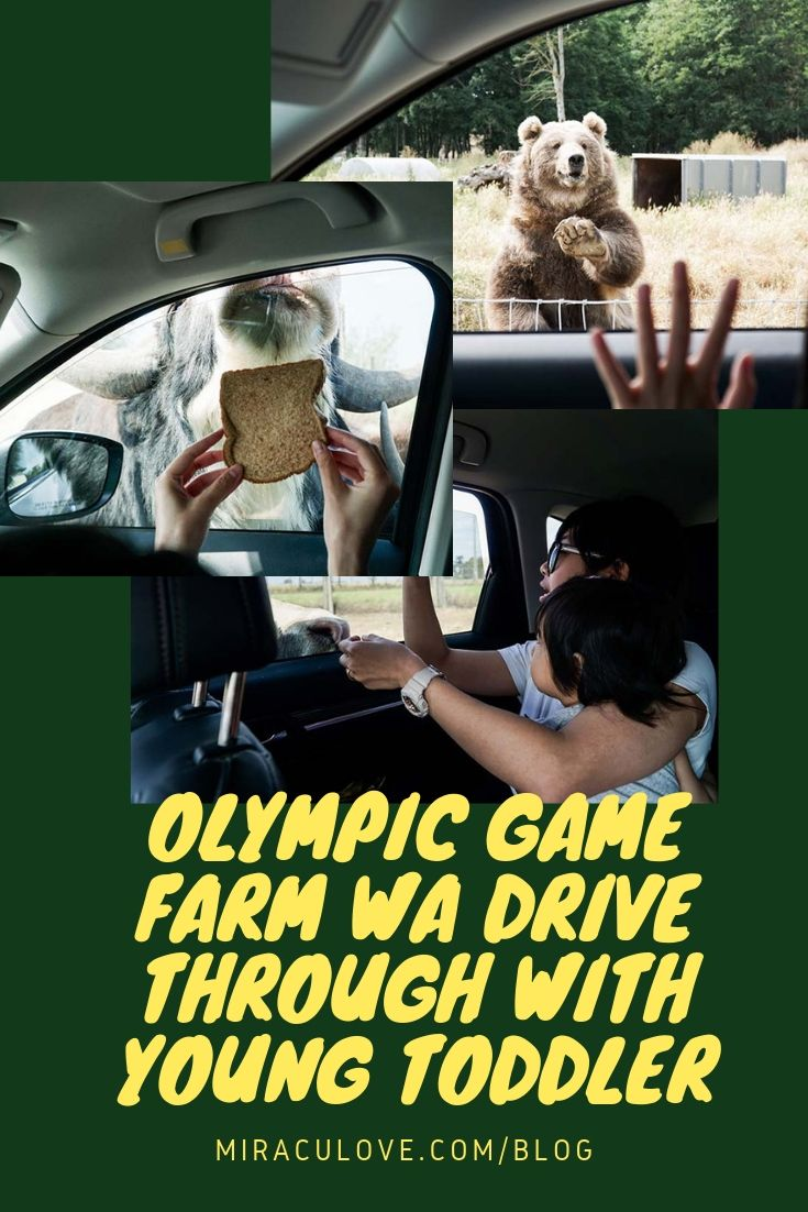 Olympic Game Farm WA Drive Through with Young Toddler